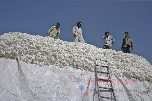 棉花供应量减少印度棉价上涨